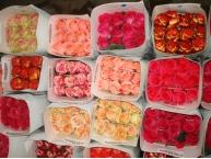 Розы по оптовым ценам