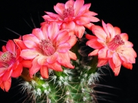 Суккуленты и кактусы