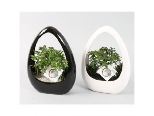 "Бонсаи ""Икебана"" Bonsai Ikebana Black And White Pot"