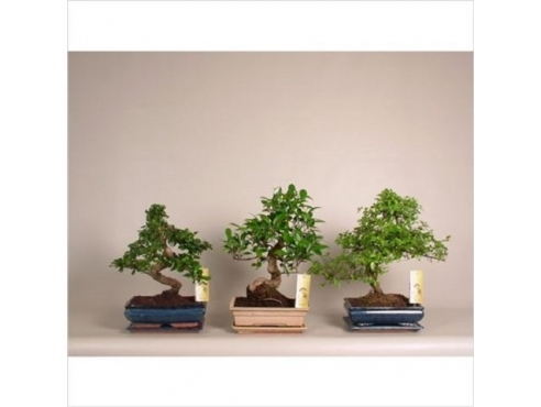 Бонсаи микс Bonsai Mix In Ceramic
