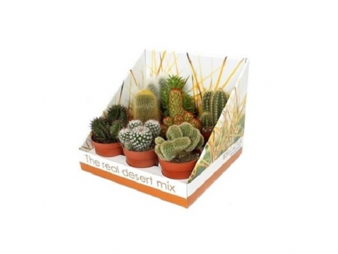 Кактус микс Cactus Mix In Real Desert Showbox