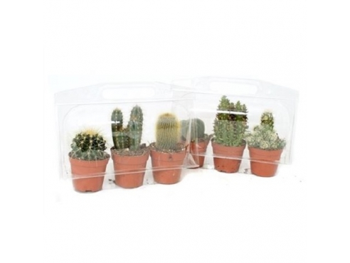 Кактус микс Cactus Mix In A3 Blister