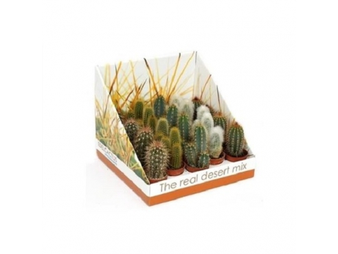 "Кактус ""Зуил"" Cactus Mix Zuil In Real Desert Showbox"