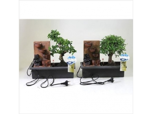Бонсаи микс Эйзикар Уотерфолл Bonsai Mix Easycare Waterfall