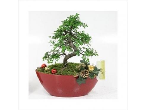 Бонсаи Арражемент Кристмас Bonsai Arrangement Christmas