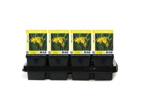 Ирис ложноаировый Iris Pseudacorus - Pot 9 Cm