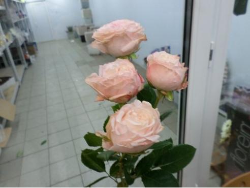Пионообразные розы