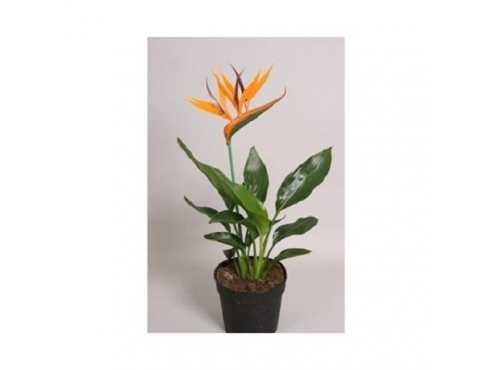 Стрелиция Strelitzia With Plastic Flower