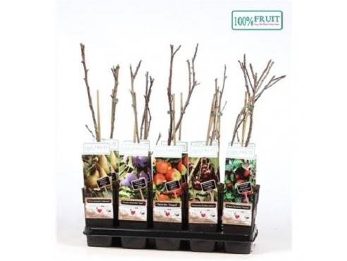 Саженцы плодово-фруктовых деревьев микс Fruit Mix Tree