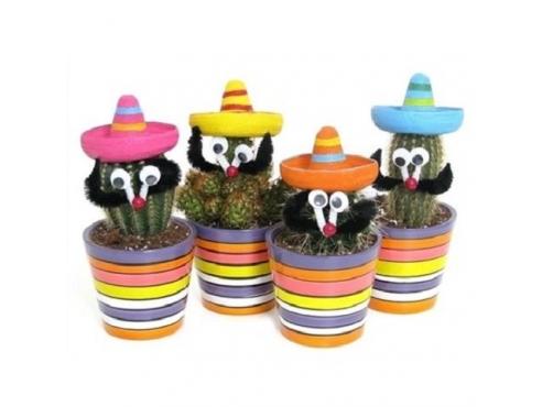 Кактус микс Cactus Mix Mexico
