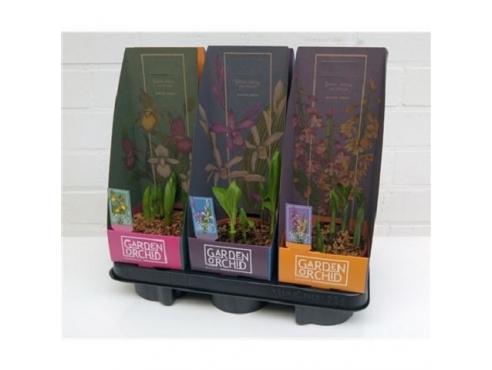 Садовая орхидея микс Garden Orchids Mix Met Potcover