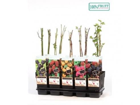 Саженцы плодово-ягодных кустарников микс Fruit Mix