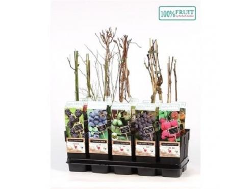 """Саженцы садовых плодово-ягодных кустарников """"Комплит"""" Fruit Mix Complete"""