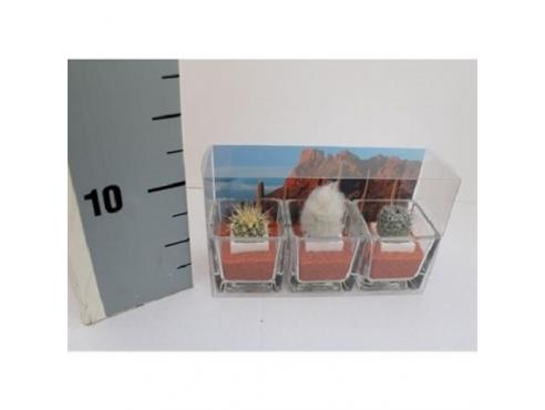 Кактус микс Cactus Mix Mini In Glass In (3x) Desert