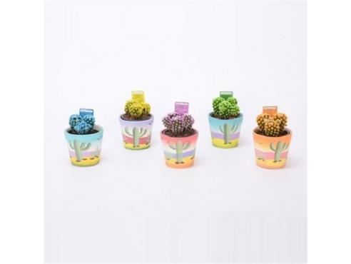 Кактус микс Cactus Mix In Cactuspot