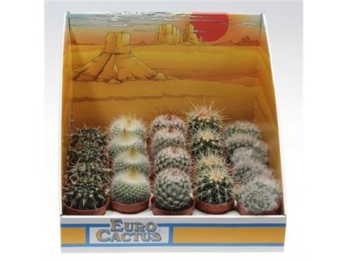 "Кактус ""Шар"" Cactus Mix Bol In Showbox"