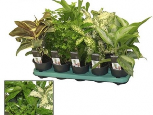 "Микс растений ""Грин Экстрим"" Plant Mix Green Extreme (decorum)"
