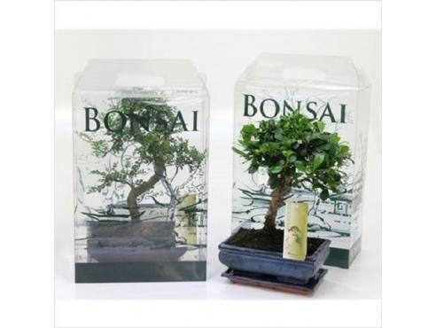 Бонсаи подарочные Bonsai Mix In Gift Box Pet