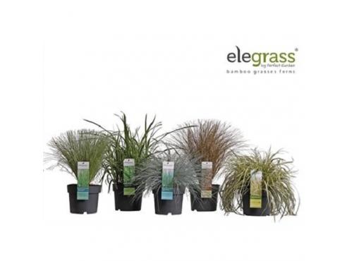 Трава декоративная садовая микс Grass Mix