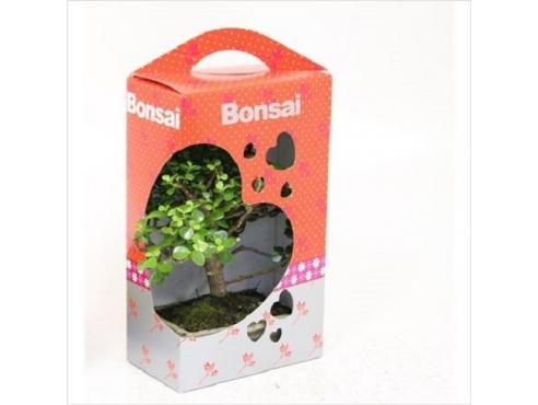 """Бонсаи микс """"Сердце"""" Bonsai Mix In Gift Box Hearts"""