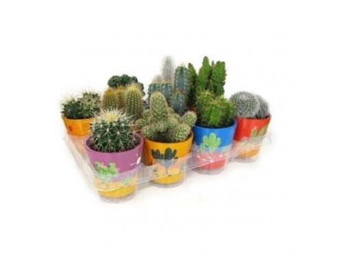 Кактус микс Cactus Mix In Mexicopot