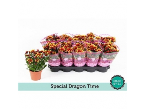 "Хризантема ""Драгон Тайм Спешиал"" Chrys Special Dragon Time Yellow"