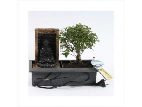 Бонсаи Сагереция Будда Bonsai Easy Care Sageretia Buddha