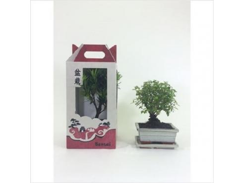 Бонсаи микс подарочные традиционные Bonsai Mix In Gift Box Traditional