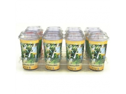 Ирис сибирский Iris Siberica 'white' - Beker 500 Cc