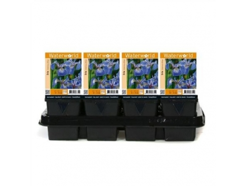 Ирис сибирский Iris Sibirica 'blue' - Pot 9 Cm