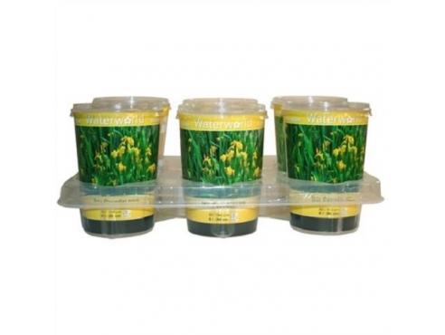 Ирис ложноаировый Iris Pseudacorus - Beker 1000 Cc